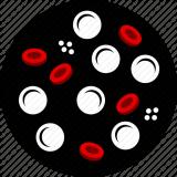 Рак крови (лейкоз)